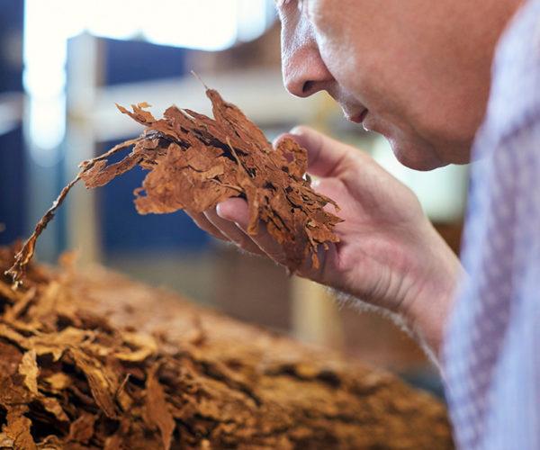 tobacco leaf processing